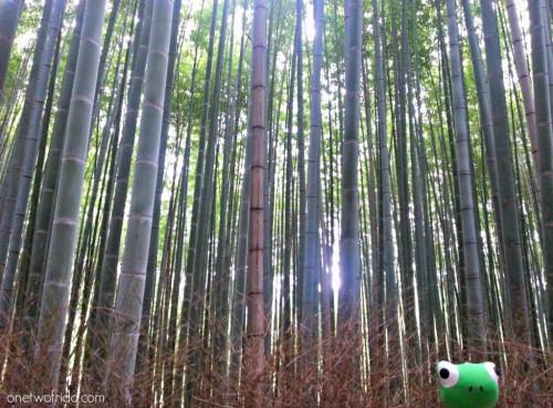 Kyoto - Arashiyama - foresta di bambù