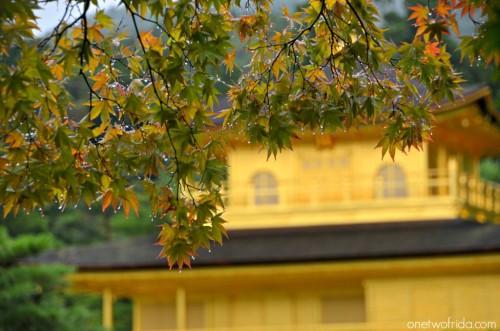 Kyoto - Kinkaku ji - padiglione d'oro