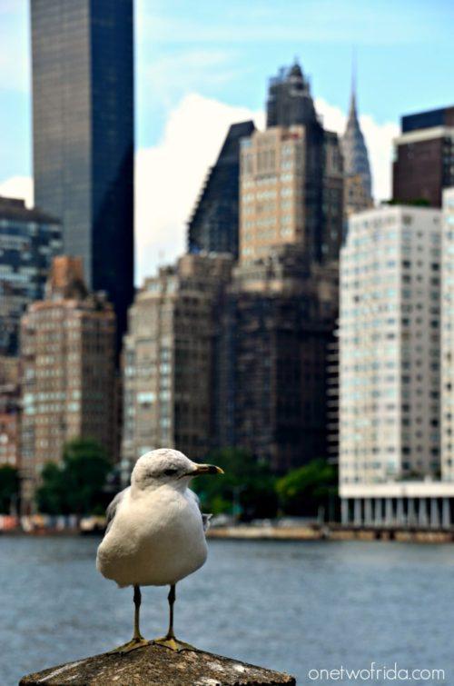 07 - Roosevelt Island - New York una foto al giorno