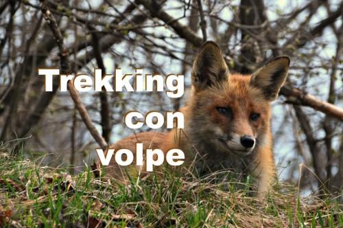 Idee per il weekend: trekking dietro casa con la volpe