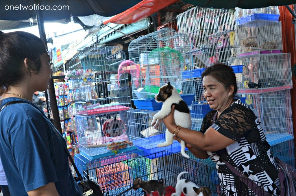 chatuchak pet market