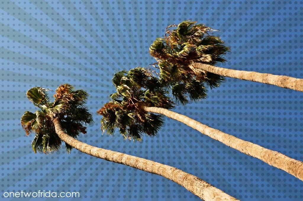 informazioni-utili-viaggio-california